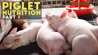 Piglet Nutrition Part 1 : Importance of Piglet Nutrition | Agribusiness Philippines