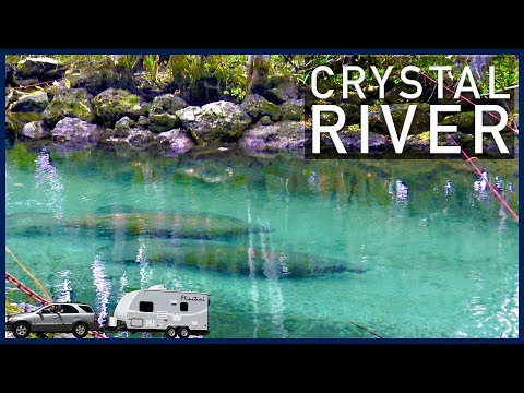 crystal river dating site A guide for diving crystal river, usa, including the best time to scuba dive with the beautiful manatees includes information on water temperature and other travel information for divers.