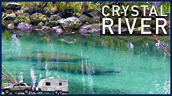 Crystal River, Florida: Manatee Festival and Three Sisters Spring