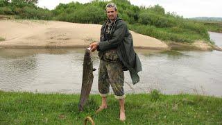 Рыбалка сом на донку сом на саранчу завел за дуб река Мокша