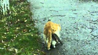 Funny cats mating fail
