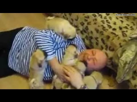 The cutest video: Pug pups ATTACK man with love:)