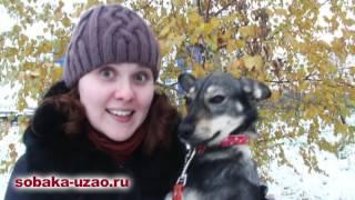 Деби из приюта Щербинка уезжает домой! SOBAKA-UZAO.RU