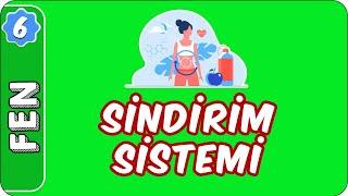 Sindirim Sistemi   6. Sınıf Fen evokul Kampı