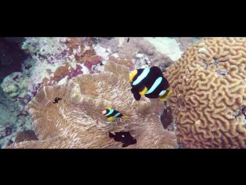 koh-racha-island-&-coral-island-phuket-snorkeling-adventure-|-theasia.com