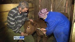 В начале года около 6 тысяч животных в Сочи получат прививки от сибирской язвы