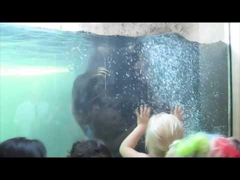 Como Zoo Minneapolis