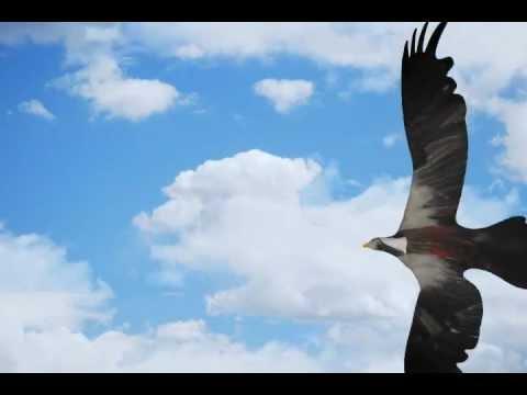 Animasi Burung Lucu 3d Youtube