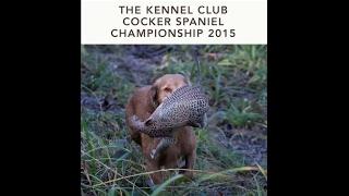 2015 Cocker Spaniel Championship