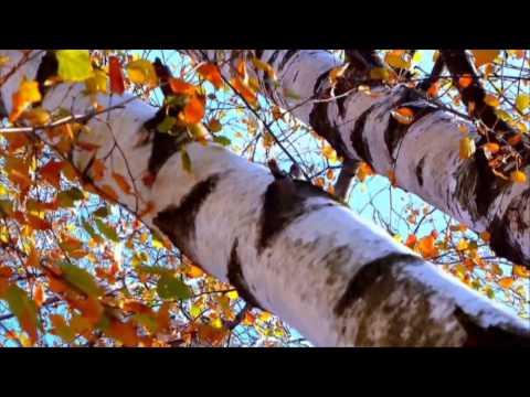 Осень в городе.  Елена Курячий.  Видео -Алена Премудрая