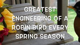 vuclip Robin Birds Greatest Engineering+Robin Birds Nest May 9, 2018