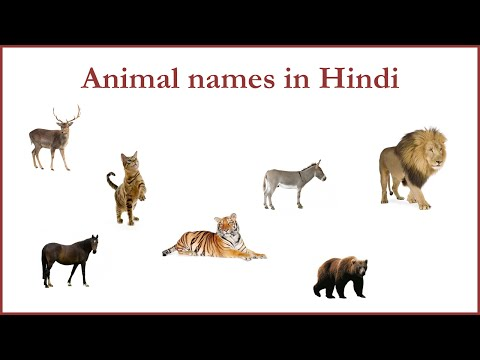 essay on pet animal in english Dog is my pet animal it is a very useful and an obedient animal it is found everywhere it has no horns on its head it has two bright eyes it has four legs and small tail.