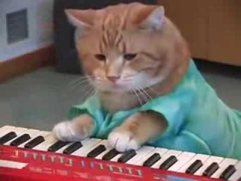 Cat Piano Youtube