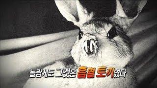 [서프라이즈] 신비한 동물 사진전의 충격적인 비밀