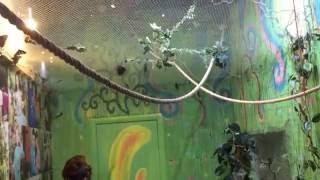Парк бабочек 2(Парк тропических бабочек, Казань 2015г., 2016-06-07T17:36:17.000Z)