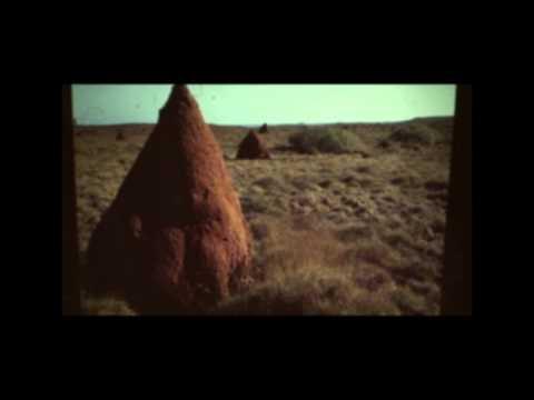 Biodiversity – The Barrow Island Story