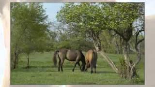 Gila Spanish Horse Herd At Ispmb In South Dakota
