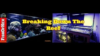 Breaking Down The Reef Tank | 200 Gallon Frag Tank Build Part 3