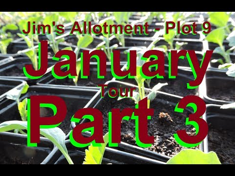 Jim's Allotment - Plot 9 - January Tour Part 3 - All About Seeds