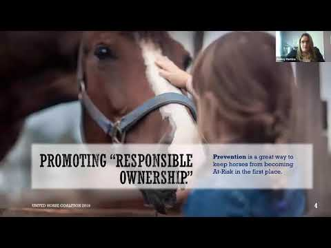COVID-19 Financial Assistance Options for Horse Owners and Horse Businesses