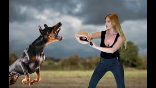 WORLD'S DEADLIEST PROTECTION GUARD DOGS  £50,000 THREAT KILLERS