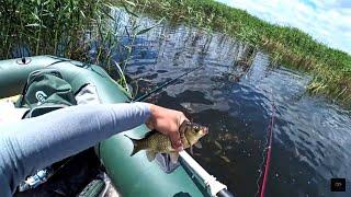 В поиске Карася 2019! Рыбалка на лодке! Участие на канале Ишим Рыбалка !