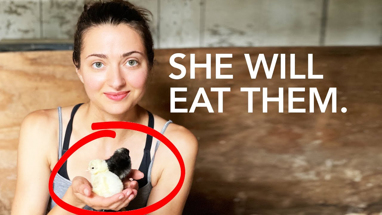 The Most Ethical Way to Raise Chickens for Meat