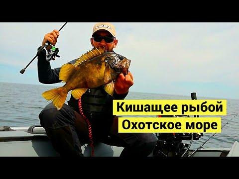 Кишащее рыбой Охотское