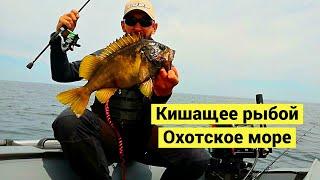Кишащее рыбой Охотское море / Okhotsk sea. Fish everywhere