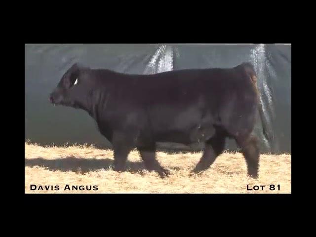 Davis Angus Lot 81