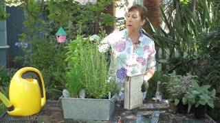 How to Grow Parsley & Oregano : Garden Space