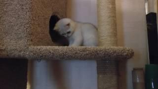 Домик-когтеточка для кота