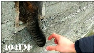 What will happen if you grab a cat by the tail