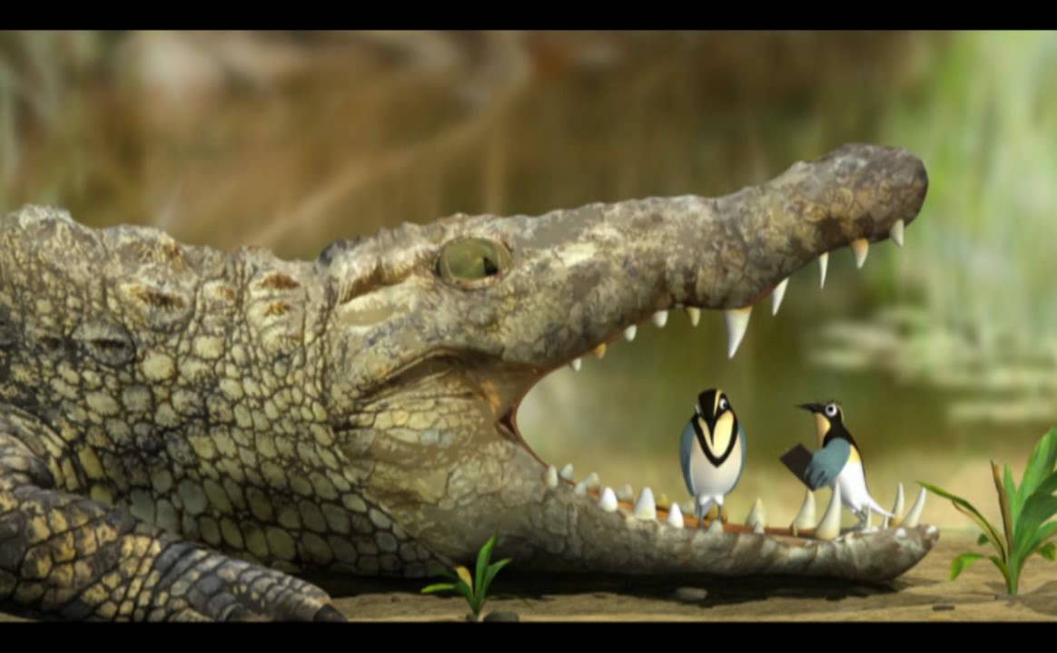 Plovers and crocodiles - photo#6