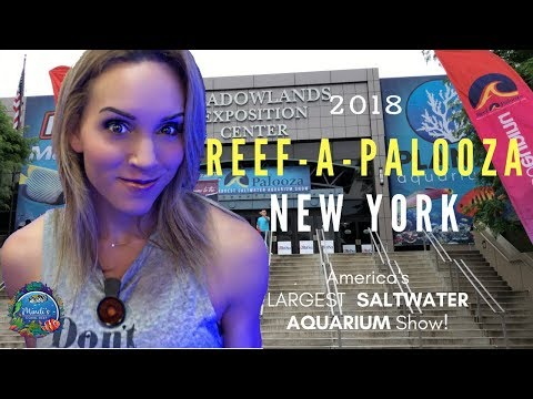 Reef-A-Palooza New York 2018 - Coral Reef And Saltwater Aquarium Expo  -  Mindi's Coral Reef