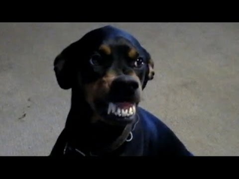 Dog Farts And Makes A Funny Face Ewww Youtube