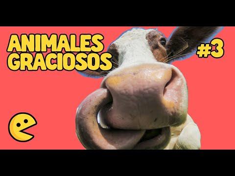 Videos de ANIMALES MÁS DIVERTIDOS de internet 2019 2   Videos chistosos, caídas, bromas y animales