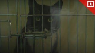Кот заложник