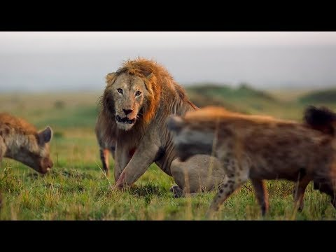 BBC Earth's Best Of The Decade | BBC Earth