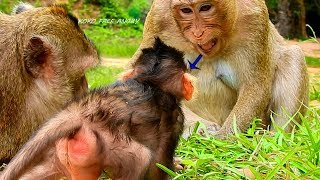 OMG,What Koko Monkey Doing With Baby Lizza, Look Her Face So Angry With baby,But Baby Don't know