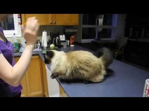 Munchie Novice Trick Dog Submission - Aug 12, 2016