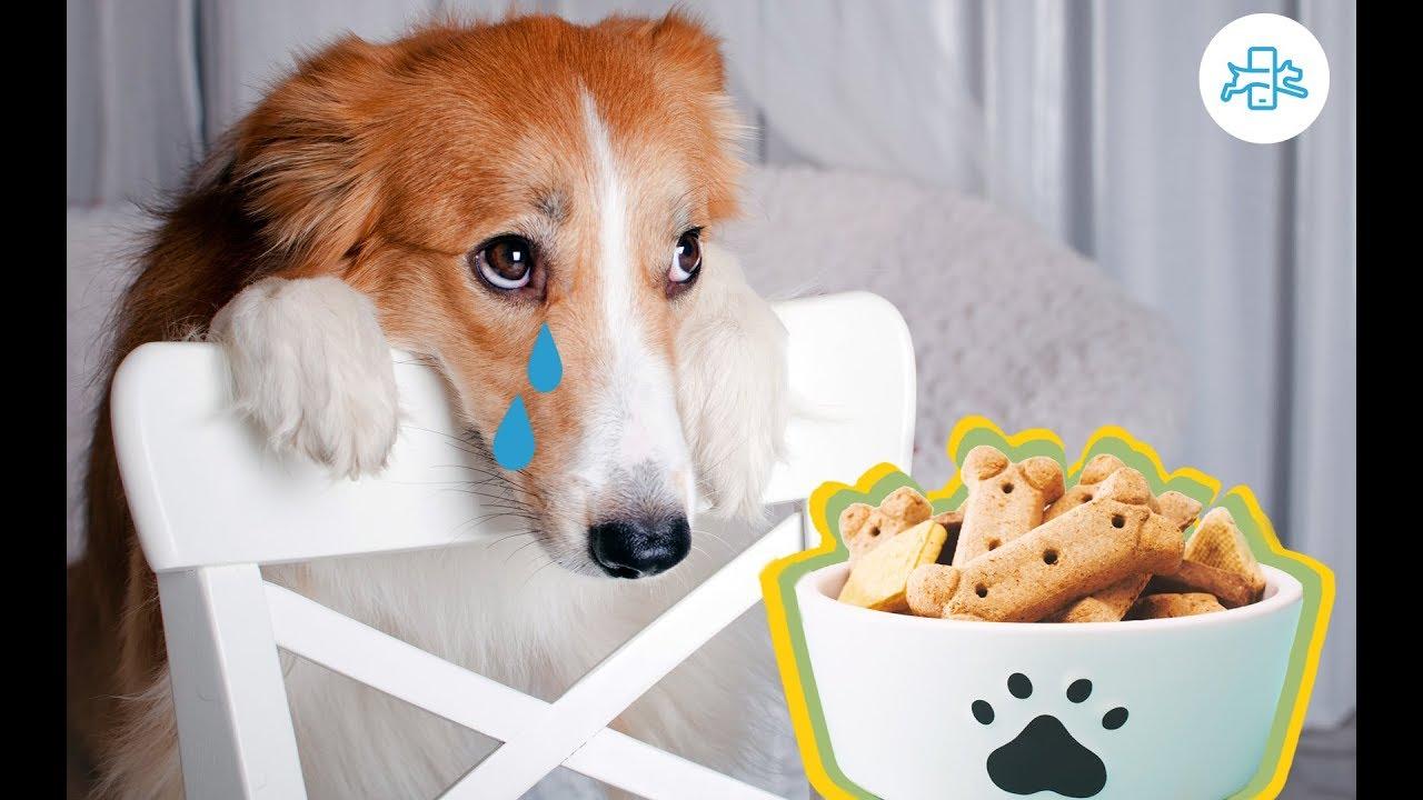 mi perro vomita de noche si no come