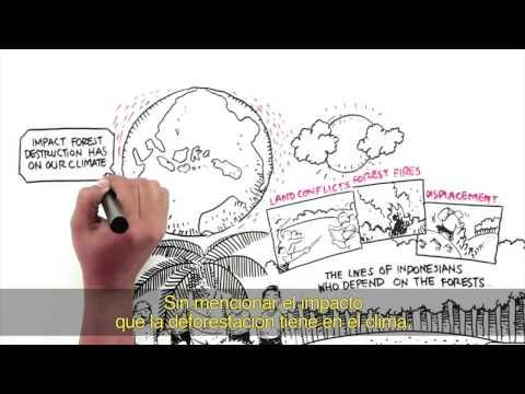 La deforestación y el aceite de palma