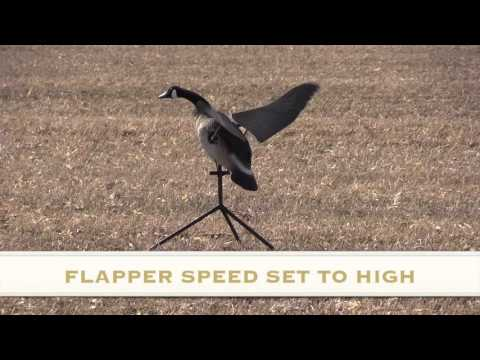 DRONE FOOTAGE PART 2 TESTING of LUCKY FLAPPER CANADA GOOSE DECOY