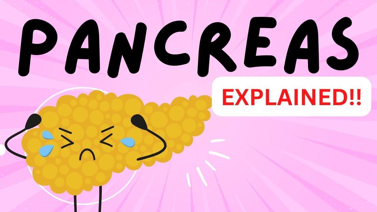 Pancreas Islets Of Langerhan Alpha Cells Beta Cells Glucagon