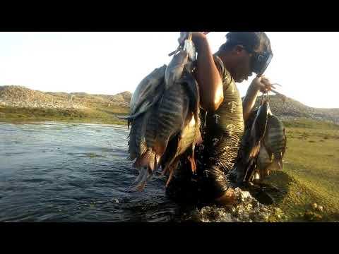 Increíble Pesca De TILAPIAS