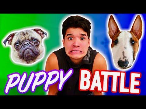 PUPPY INSTAGRAM BATTLE! *Who Will Win?!*
