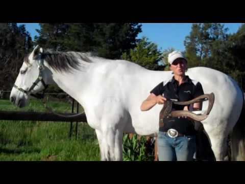 Matching saddles to your horses toplines