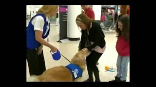 Trained Therapy Dog Bringing Stress Relief To Miami International Airport (mia) - Meet Casey