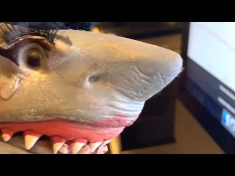 Download Shark Puppet James Charles
